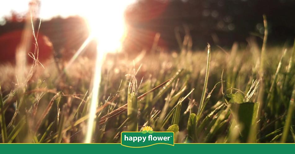 C mo cuidar el pasto en este verano happy flower for Como cuidar el pasto de mi jardin