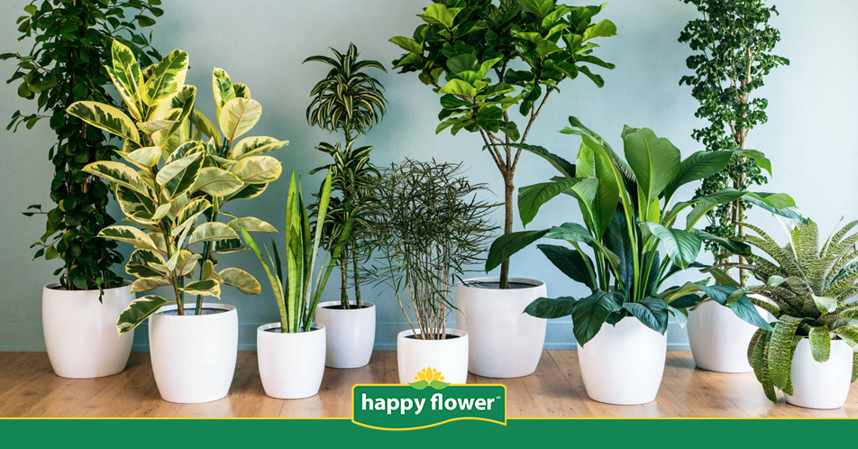 C mo cuidar las plantas de interior en oto o consejos for Cuidar hierbabuena en interior