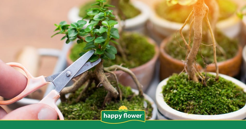 Cultivo Y Cuidado Del Bonsai Consejos Happy Flower